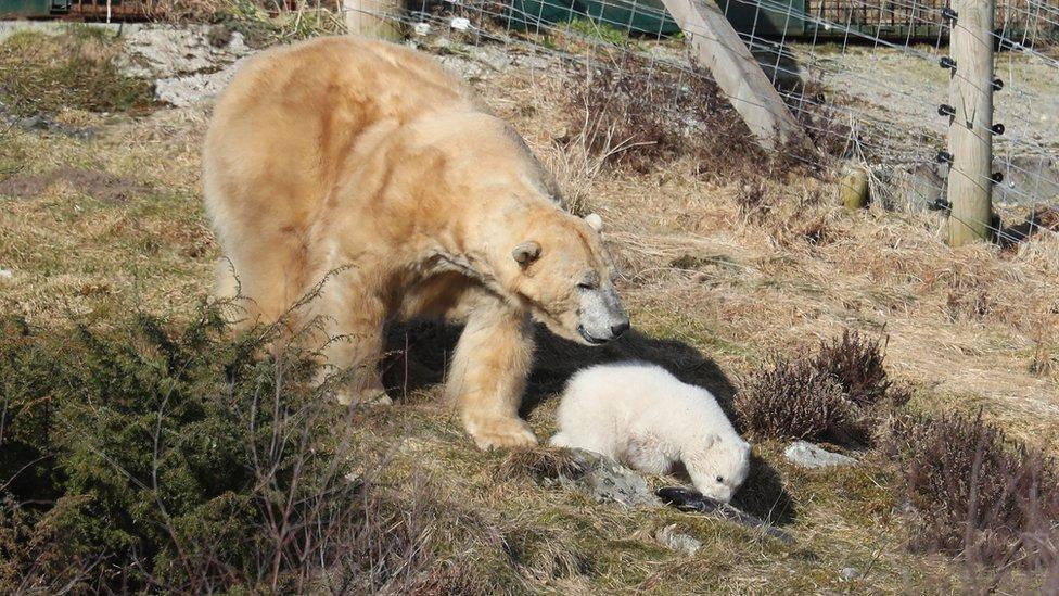 Victoria and cub