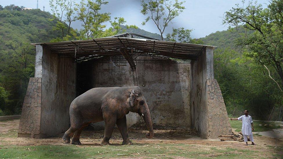 Kaavan with a caretaker at Marghazar Zoo in June 2016