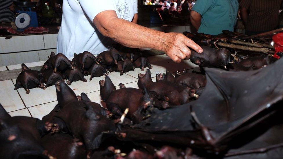 8 de fevereiro de 2020 - um vendedor vendendo morcegos no mercado Tomohon Extreme Meat na ilha de Sulawesi