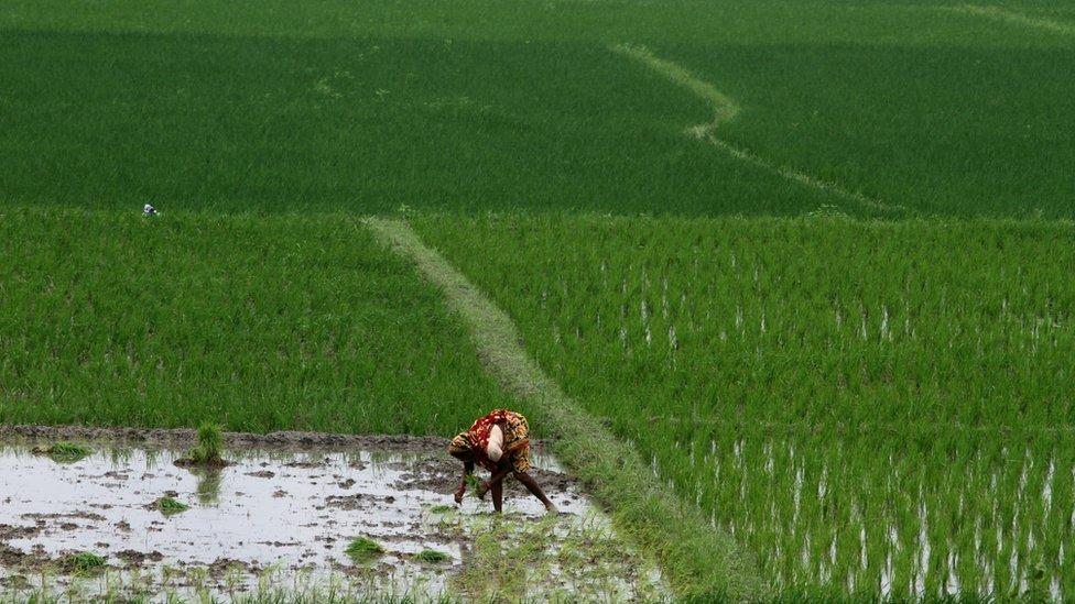 Agricultora india
