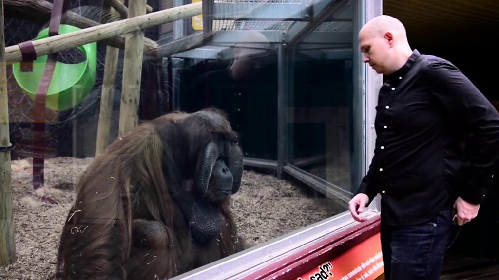 Magician's tribute to Colchester Zoo's orangutan Rajang