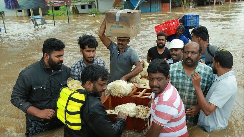 An Indian poultry farmer and his friends take out a batch of hens to a safer place at Aluva in Ernakulam district, in the Indian state of Kerala on 17 August 2018
