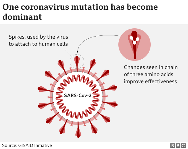 coronavirus particle with spikes. a pull-out of the spike used by the virus to attach to human cells showing changes seen in a chain of three amino acids which improves effectiveness