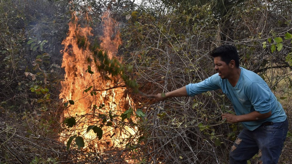 A volunteer tries to put out a fire in the surroundings of Robore in eastern Bolivia, on August 25, 201