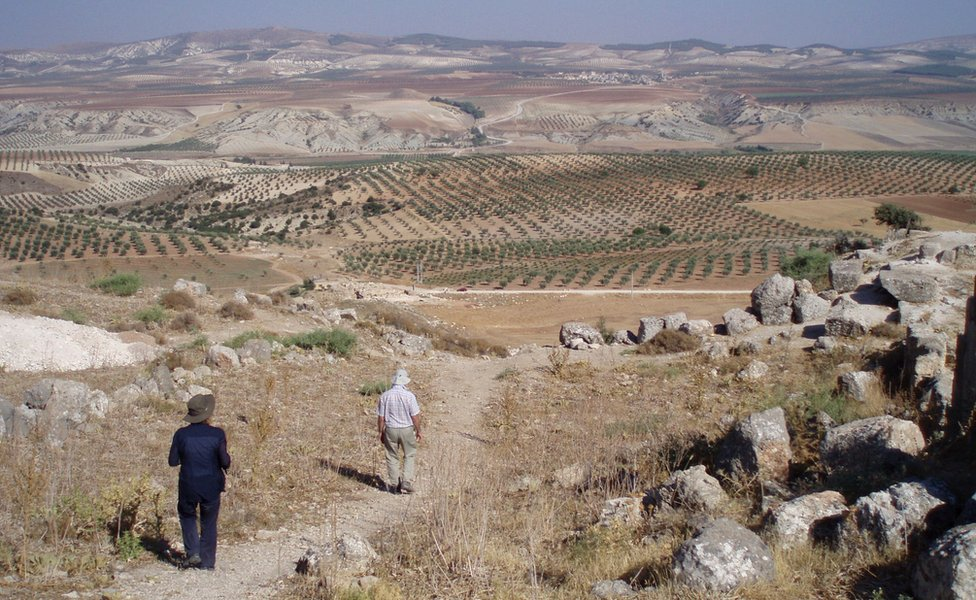 View towards olive groves in northern Afrin (file photo)