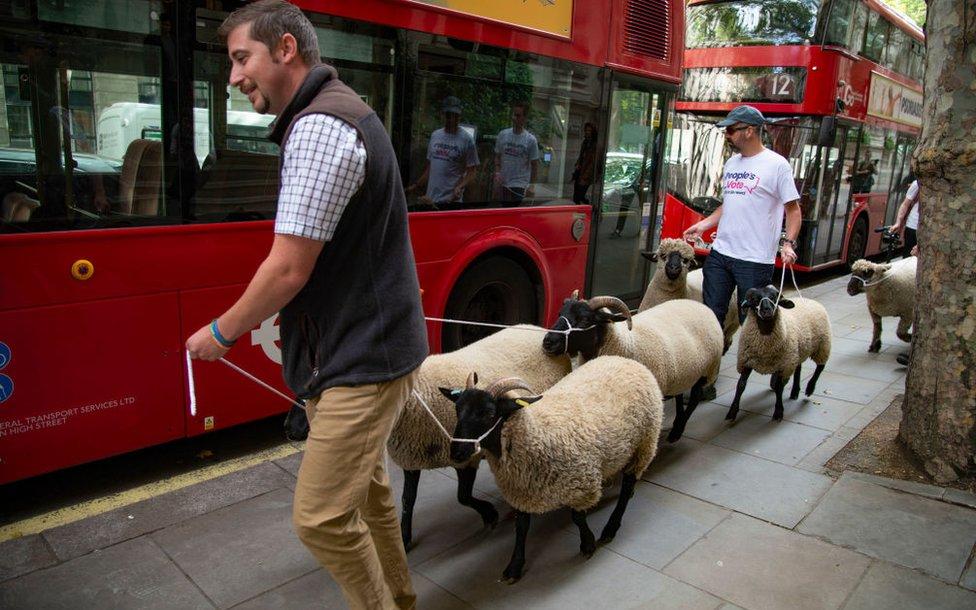 Carneros en Londres