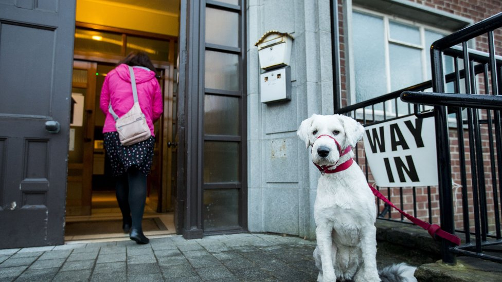 A dog waits outside as a voter arrives at the South Belfast Polling Station