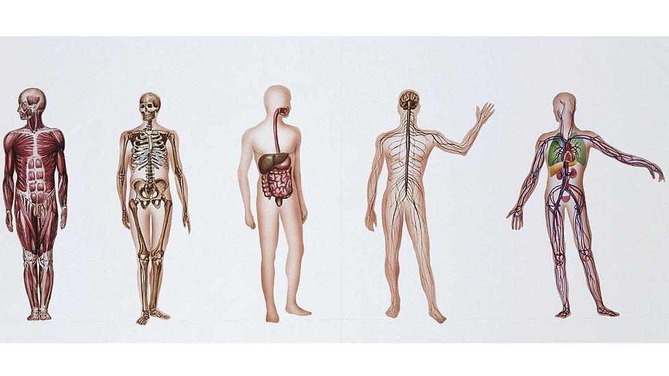 ilustracija unutrašnjih organa