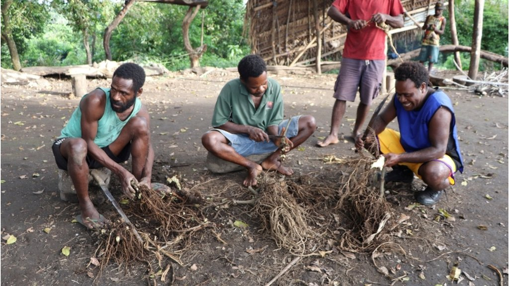 Prince Philip devotees prepare kava roots to be drunk at an upcoming mourning ceremony to take place for the late British prince who passed away Friday at age 99, in Yaohnanen village, Tanna island, Vanuatu 10 April 2021