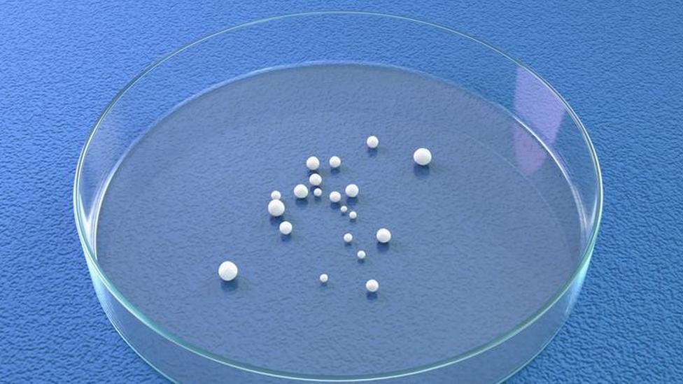 Placa de petri circular con pequeñas esferas dentro que representan los minicerebros