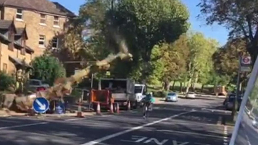 Lewisham video shows falling tree narrowly missing cyclist