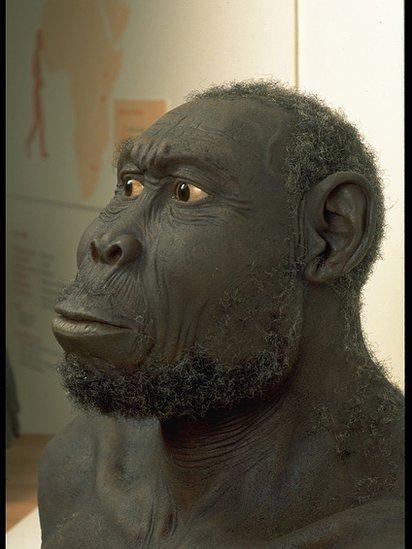Reconstrucción en Homo Rudolfensis.