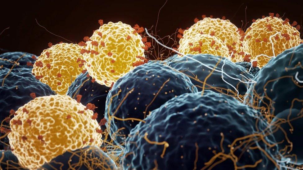 تستهدف معظم اللقاحات المضادة لفيروس كورونا البروتين الموجود على سطح الفيروس