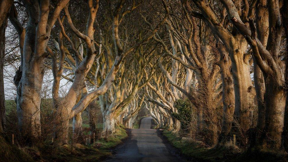 The Dark Hedges - tunel od bukovih stabala u Severnoj Irskoj koja igra Kraljev drum u Igri prestola
