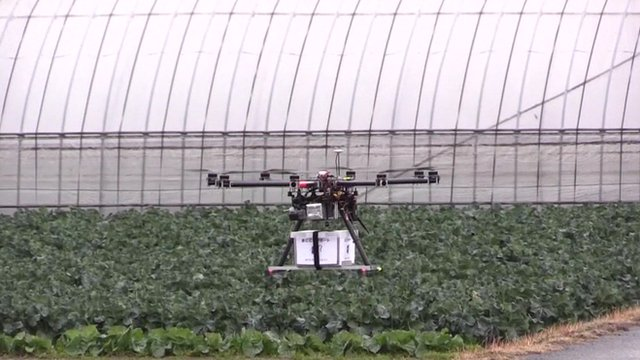 Drone carrying food