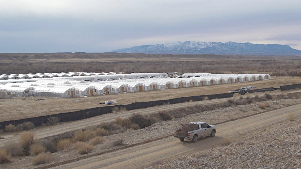 A cannabis farm against the backdrop of snow-capped mountains in Shiprock, New Mexico