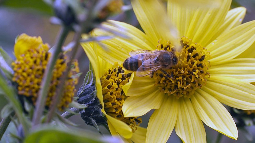Can listening to bees help save them - and us?