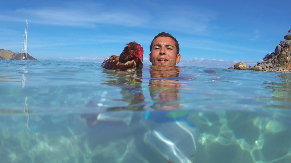Guirec Soudee and his hen Monique in the sea in the Antilles