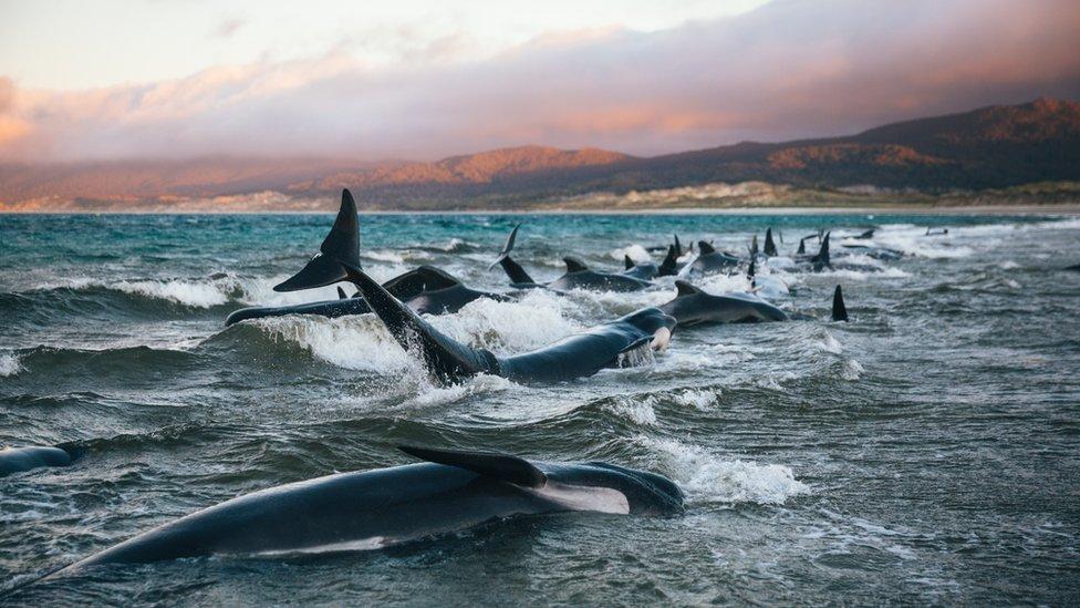 kitovi na obali
