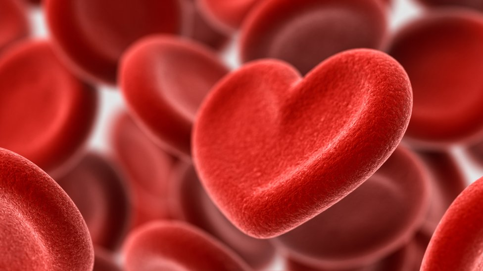 corrente sanguínea