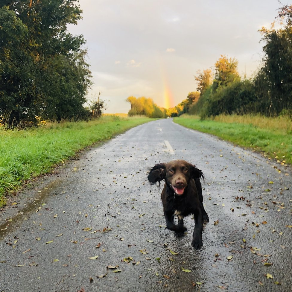 Ted (the dog) running in Darrington, West Yorkshire