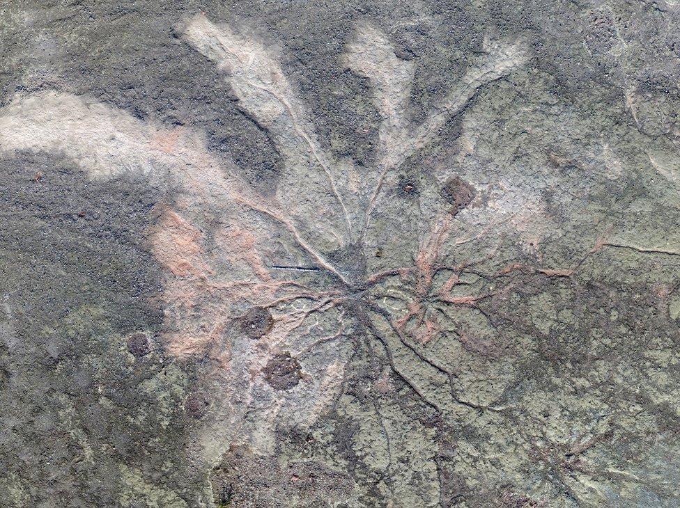 Restos de árboles fosilizados