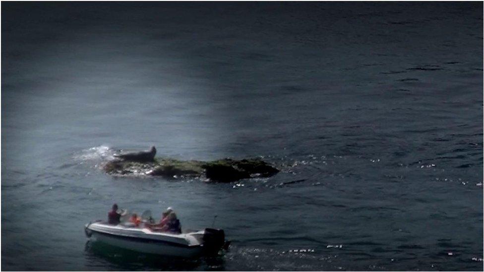 Seal tourists 'risk being bitten', researchers warn