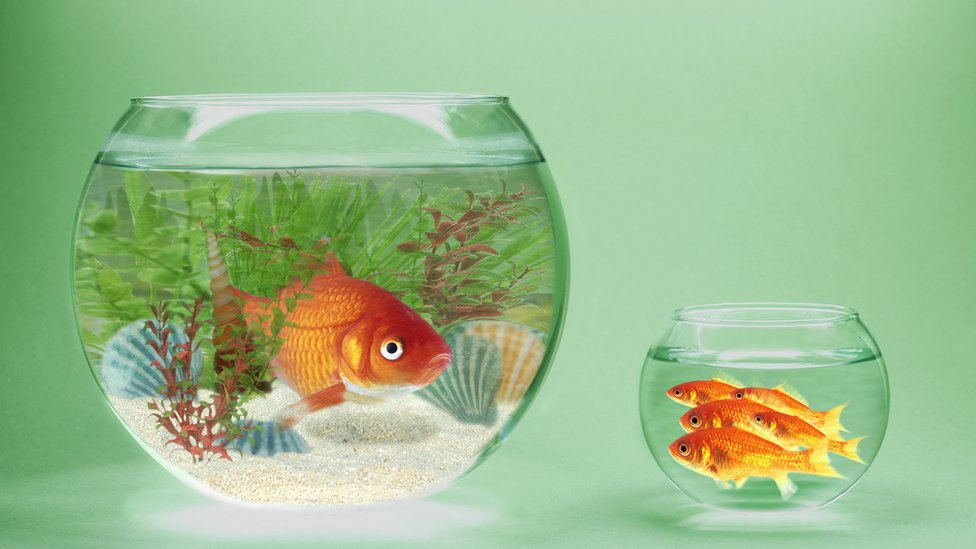 Large fish tank with one fish and a small one with several