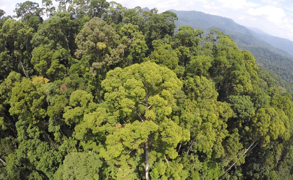 Bosque donde se encuentra Menara