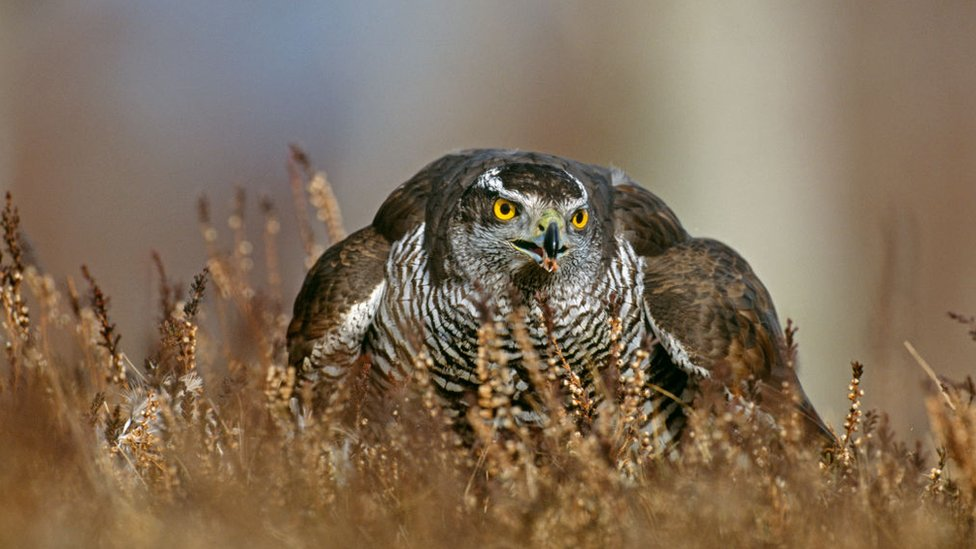 Scottish Borders bird of prey shootings investigated
