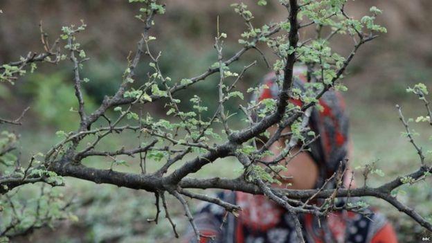 कठुआ रेप मामले के एक साल बाद भी परिवार को इंसाफ़ का इंतज़ार: ग्राउंड रिपोर्ट