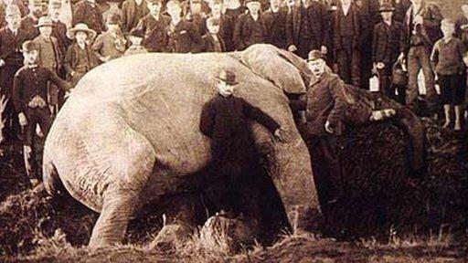 Jumbo giace a terra dopo la sua morte con il suo custode Walther Scott Foto: Wiki Commons