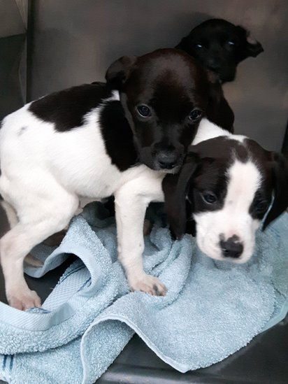Puppies found abandoned in freezing conditions on the street in the dark in North County Dublin, on Thursday 30 November 2017