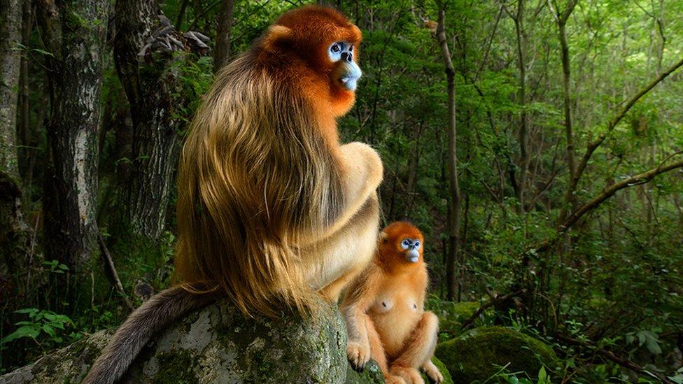 Мавпи над сваркою: у Британії обрали кращі фото дикої природи