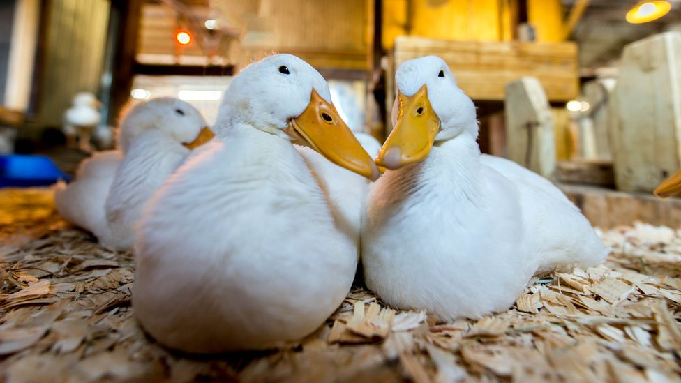 Fane Valley buys duck producer Silver Hill Foods