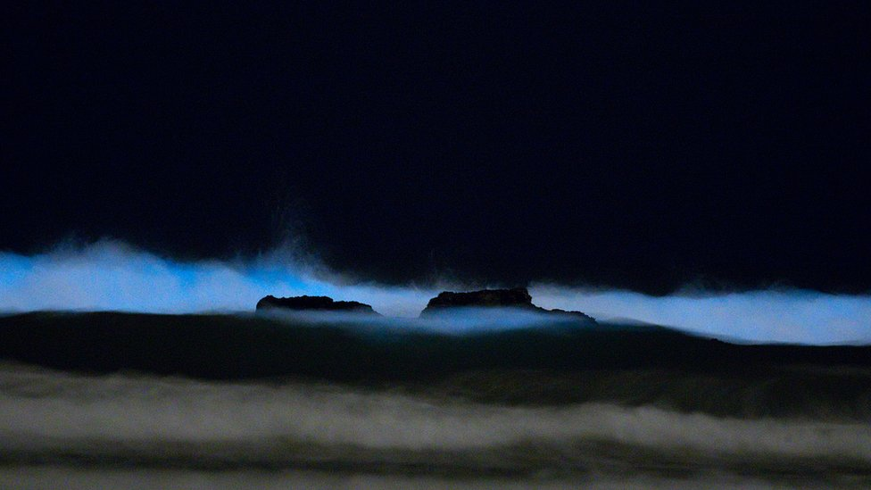 These ghostly waves were shot by Antonella Wilby, a PhD student in San Diego who regularly posts marine life pictures on her Instagram @aaaaaantonella