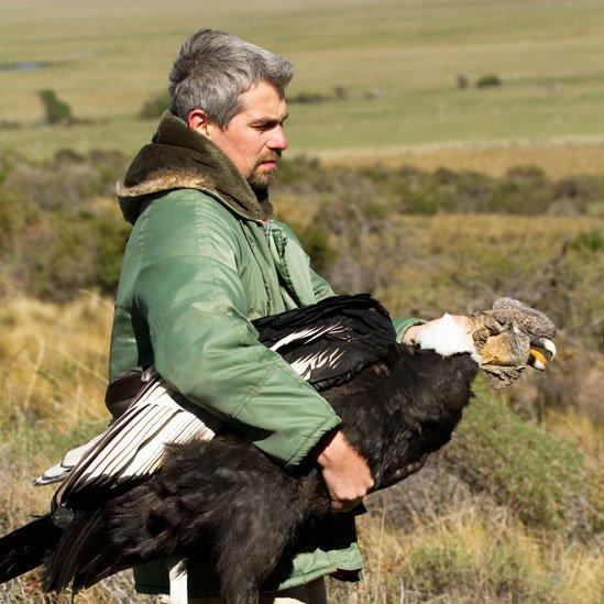 El científico argentino Sergio Lambertucci lleva dos décadas estudiando el comportamiento de los cóndores en el noroeste de la Patagonia. Foto: Gonzalo Ignazi