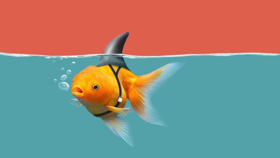 pez con aleta de tiburón