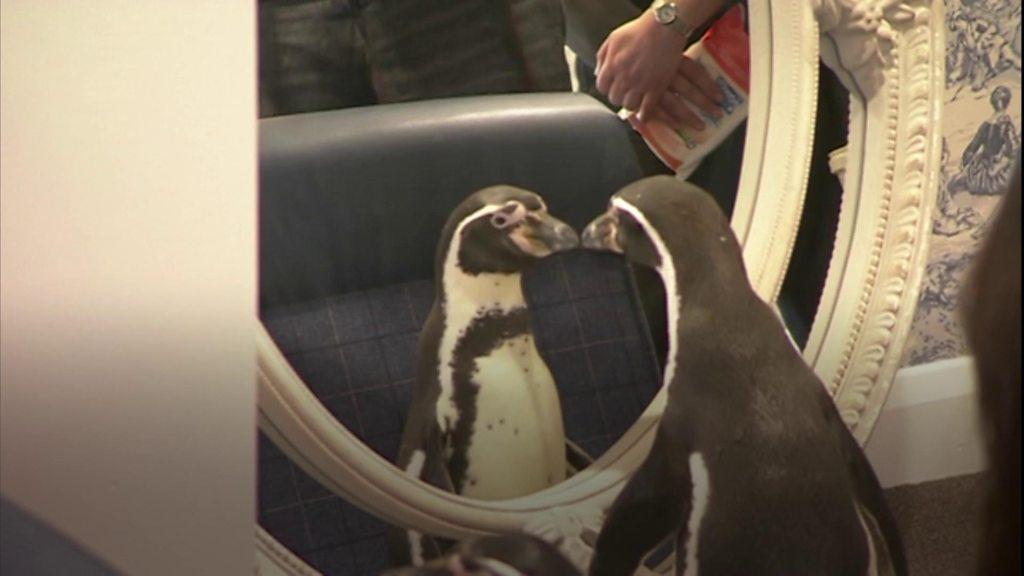 Penguins visit Windsor care home to make dream come true