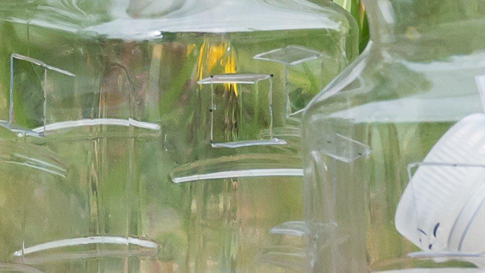 Armadilhas para vespas