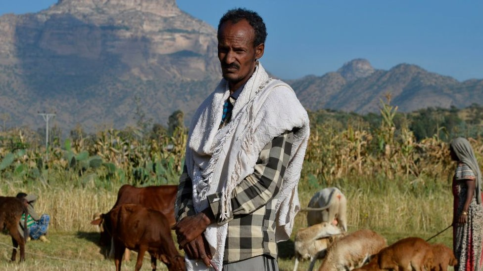 An Ethiopian farmer looks after cattle on his farm land close to Adigrat, Ethiopia - 2019