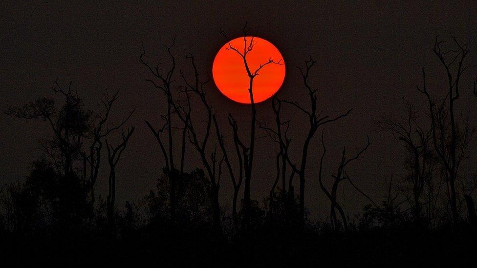 Matahari terbenam di pucuk hutan gundul