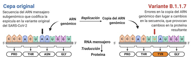 Gráfico de la mutación N507Y