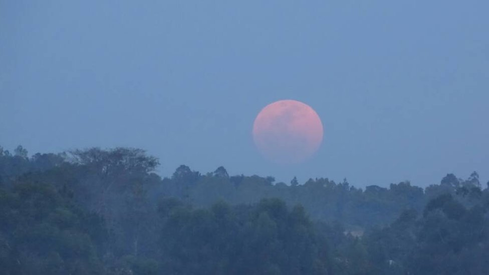 The supermoon appearing orange above some trees