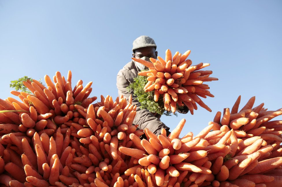 A masked man partially obscures his face with a large bunch of carrots.