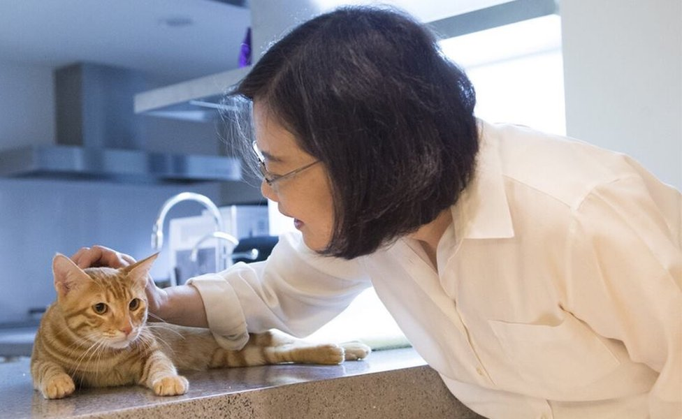 Taiwan's President Tsai with her adopted cat