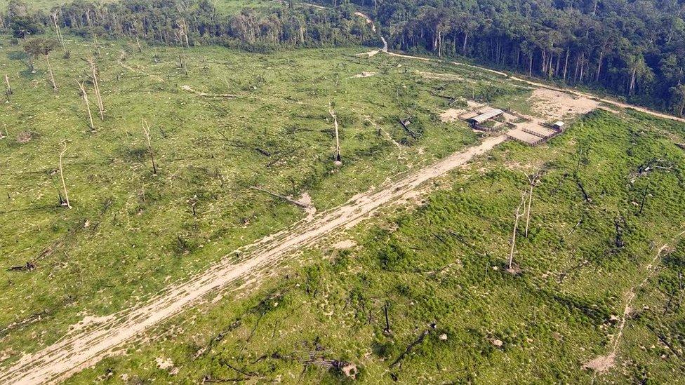 Deforestation (Getty Images)