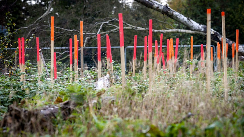 Stakes mark new growth