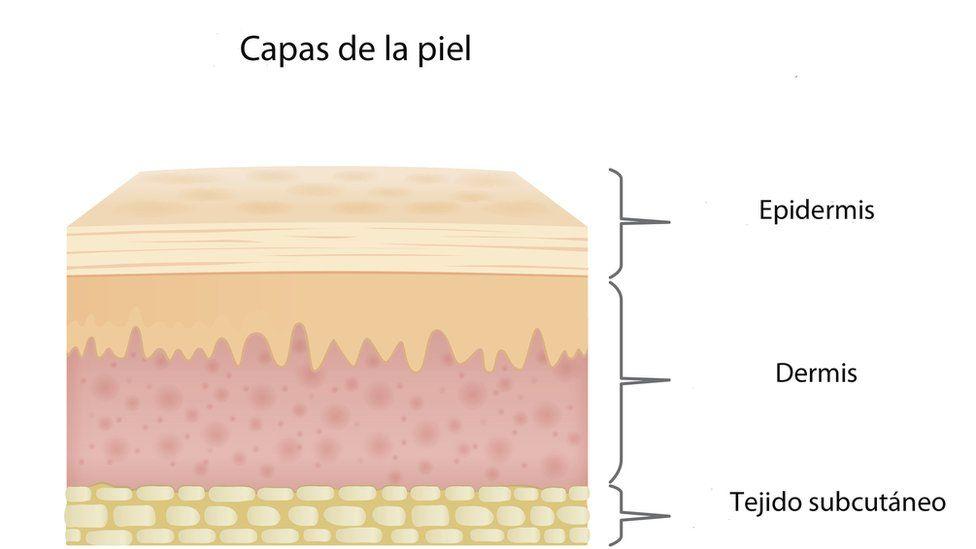 Gráfico sobre las distintas capas de la piel.