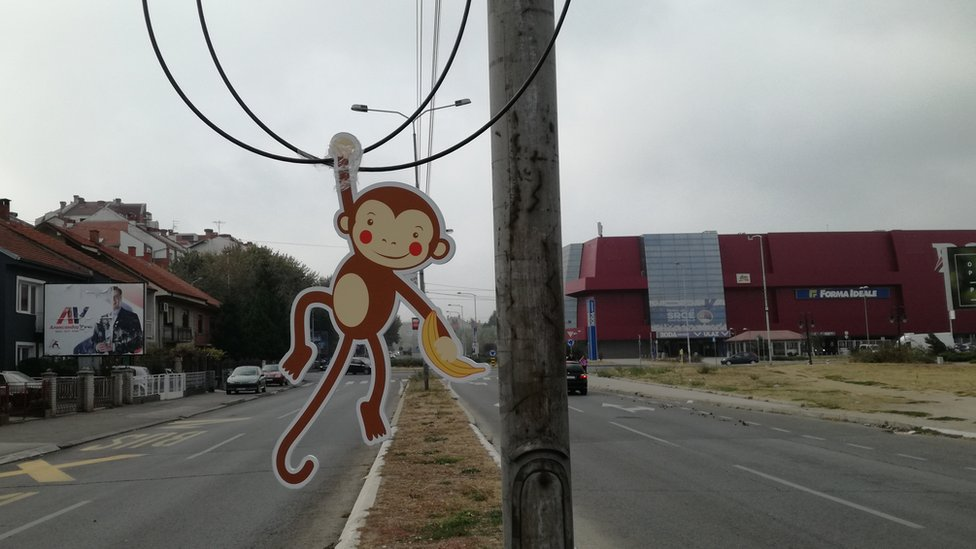 majmun na banderi
